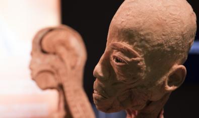 Un dels cossos exposats a 'Human bodies'