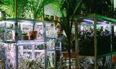 El artista rodeados de las plantas de la exposición