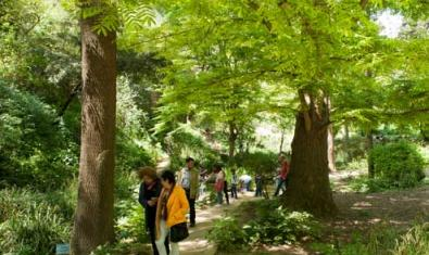 Interior del Jardín Botánico Histórico