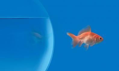 Ilustración que muestra a un pez nadando fuera de su pecera