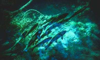 Imatge de peixos