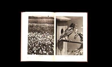 Imatges de flors i d'ocells en un llibre fet combinant llibres diversos