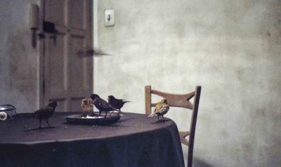 Una de les imatges de l'exposició mostra una taula de menjador amb uns ocells domèstics que s'hi passegen