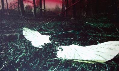Fotografia d'un bosc amb unes ales blanques pintades al centre