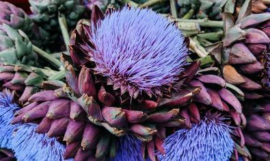 Imagen de alcachofas floridas