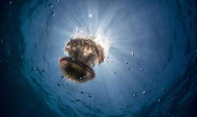 Imatge d'una medusa