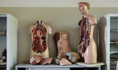 Imagen de anatomía del cuerpo humano