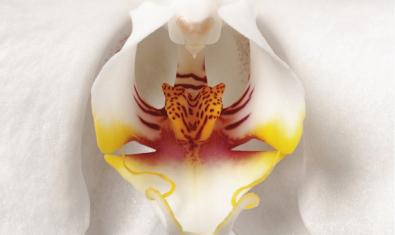 Imatge d'una orquídia