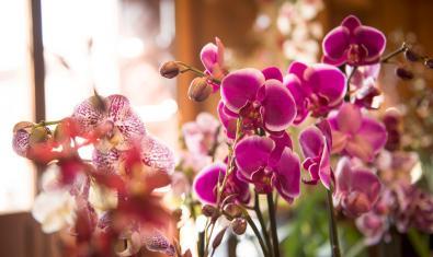 Imatge d'unes orquídies