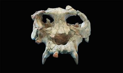 Imatge del crani d'en Pau
