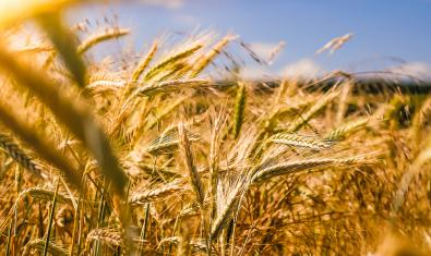 Capital Mundial de l'Alimentació Sostenible 2021