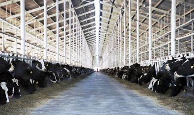 Un establo lleno de vacas dedicadas a la producción de leche