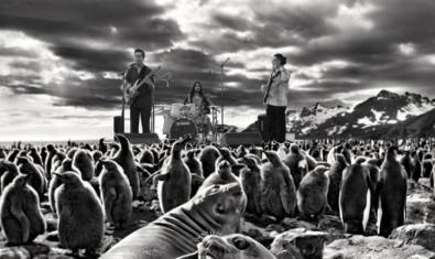 Un montaje fotográfico en blanco y negro muestra a los miembros de la banda en un paisaje polar rodeados de pingüinos y focas