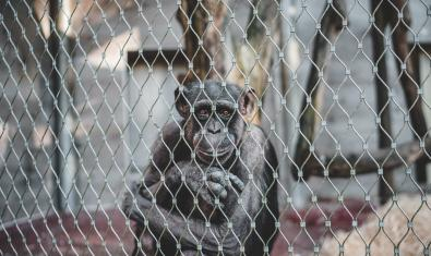 Primats sense casa