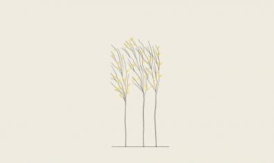 El dibuix de tres arbres enmig d'un pla serveix per anunciar la projecció