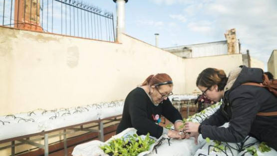 Two people working at an urban allotment
