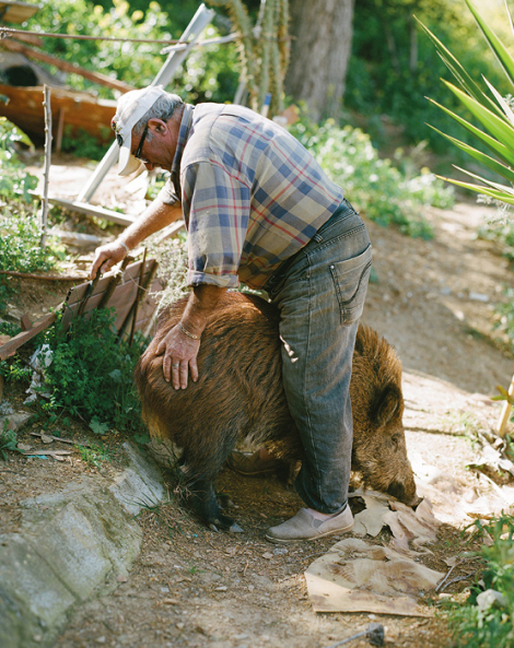 Blas, veí de Vallbona, amb Rosita, un porc senglar femella. © Myriam Meloni i Arnau Bach