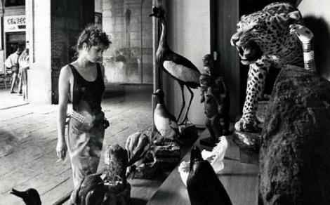 Miratge de 1987. Aparador de la botiga Taxidermia Palaus. © Pepe Encinas.