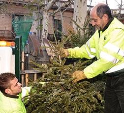 Christmas-tree collection