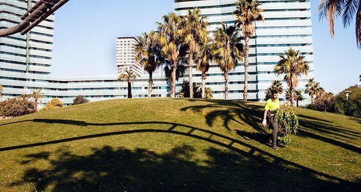 Treballador de Parcs i Jardins recollint branques tallades dels arbres