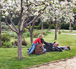 A family in a park lying on the grass under flowering trees