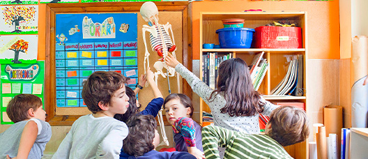 Group of pupils in class looking at a human skeleton
