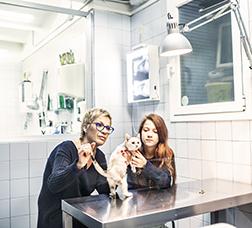 Consulta d'un veterinari on hi ha un gat al qual han de visitar