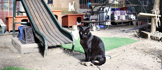 Black cat near a slide and other cats behind it