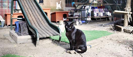 Gat negre al costat d'un tobogan i més gats al darrere