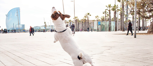 Dog jumping on a walkway