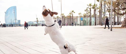 Gos saltant en un passeig