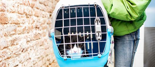 Gato en el interior de una cesta de transporte para animales de compañía