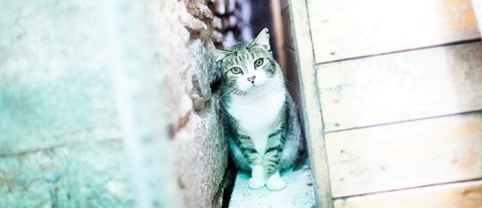 Gato escondido entre dos columnas