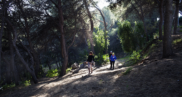 People walking through a wooded area