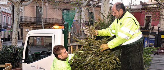 Two municipal workers collecting Christmas trees
