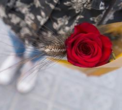 Una rosa vermella