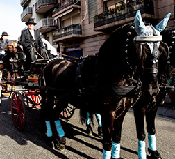 Procession of horses and carriages for the Tres Tombs de Sant Antoni.
